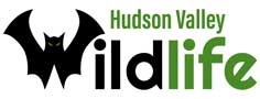 Hudson Valley Wildlife Solutions LLC