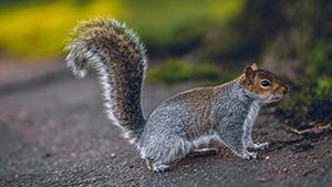 squirrel sitting on pathway