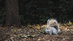 squirrel sitting in leaves