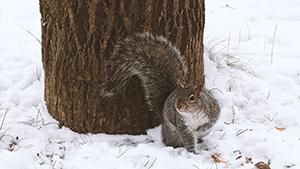 squirrel sitting in snow under tree