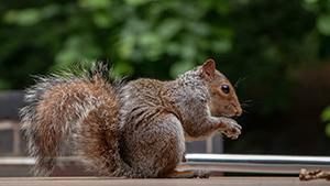 squirrel sitting on porch railing