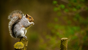 Squirrel sitting on branch and eating