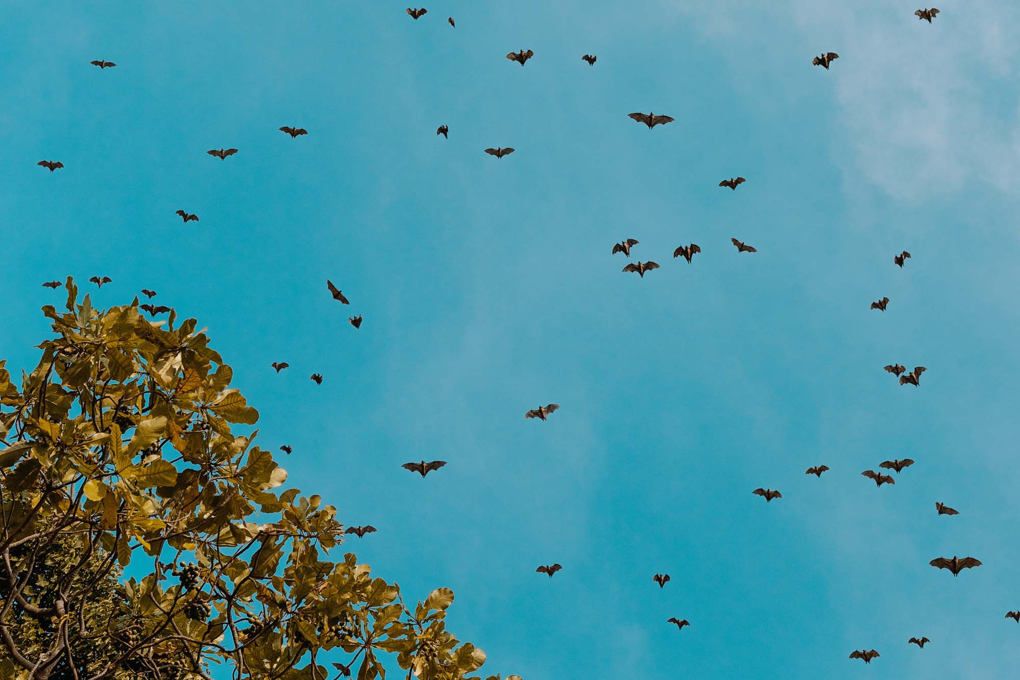 Bats flying over a blue sky and tree
