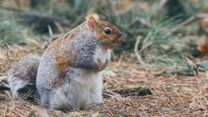 squirrel on forest floor