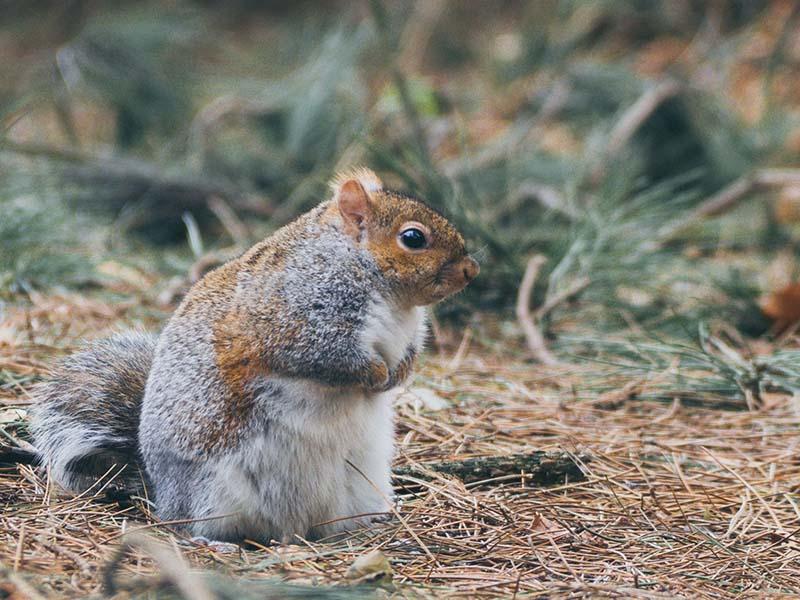 squirrel sitting on forest floor
